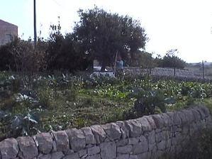 Dvc01281
